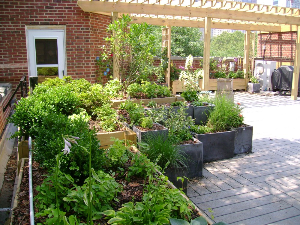 The planter boxes were primarily filled with Gaia Soil,